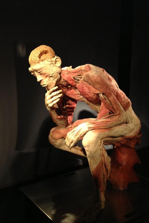 human-body01